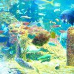 新江ノ島水族館えのすい