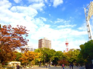横浜でオススメの紅葉スポット!関内の横浜公園から日本大通りのイチョウ並木へ