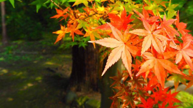 北鎌倉「円覚寺」の紅葉