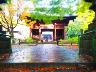 鎌倉大町「妙本寺」で楽しむドラマチックな紅葉【見頃:11月下旬〜】