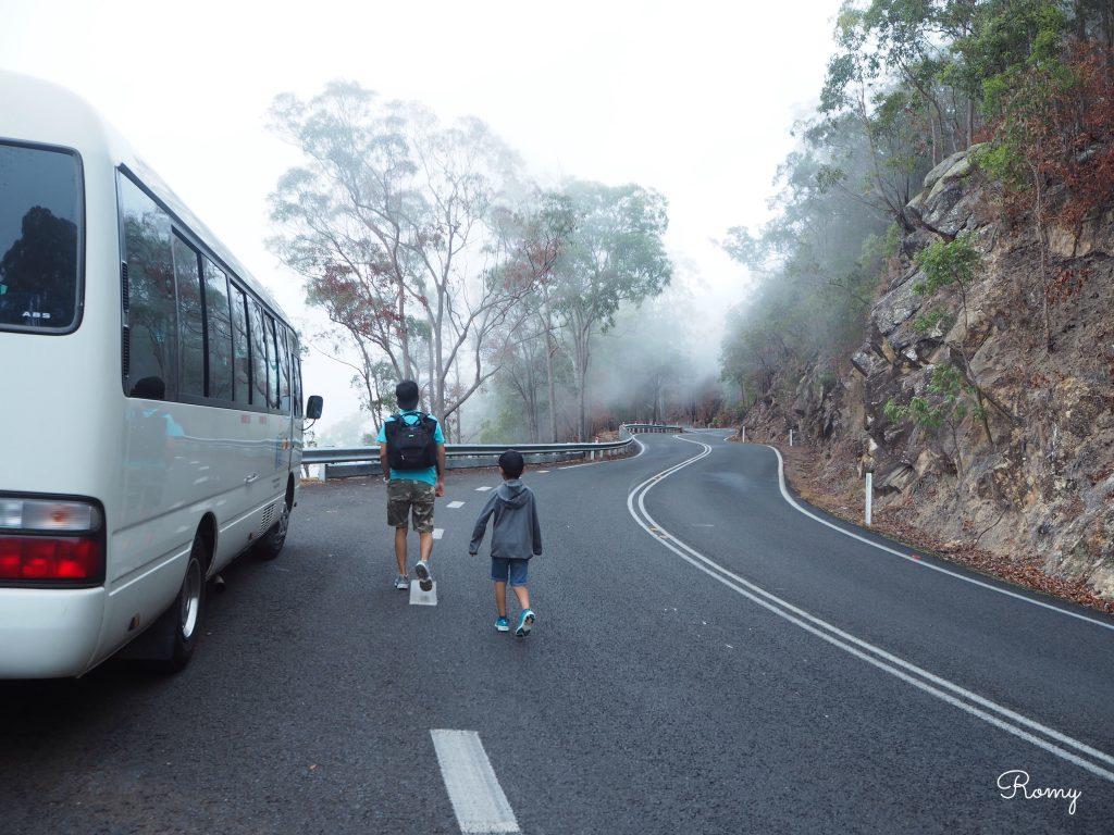 ケアンズの熱帯雨林ツアー
