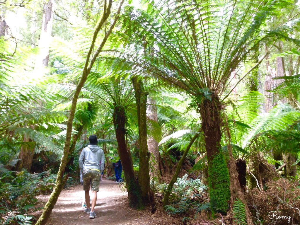 「Maits Rest Rainforest Walk(メイツレスト熱帯雨林)」