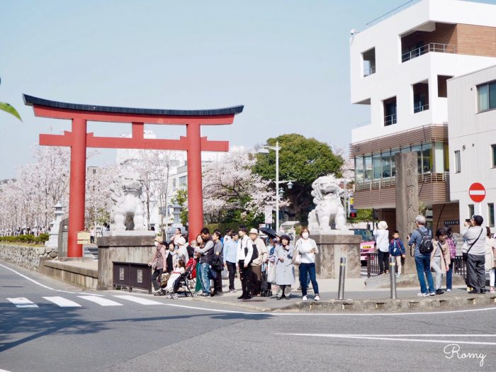 桜の時期の鎌倉・鶴岡八幡宮に向かう段葛前の二の鳥居