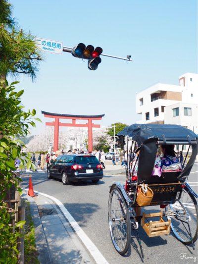 桜の季節の鎌倉・段葛の二の鳥居前