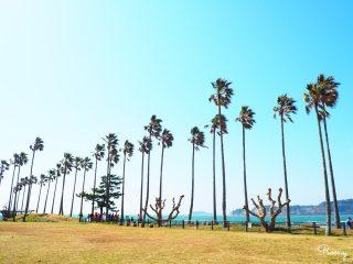 逗子マリーナは絶好の撮影スポット!ヤシの木に囲まれて南国気分を味わおう♪ 子連れでも楽しい