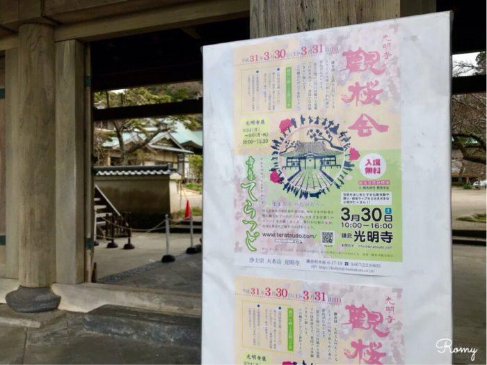 鎌倉の光明寺の観桜会