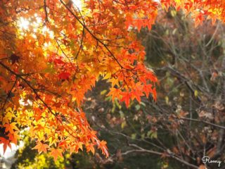 鎌倉で真っ赤な紅葉が見られる穴場スポット「鎌倉宮」【見頃:11月下旬〜12月中旬】