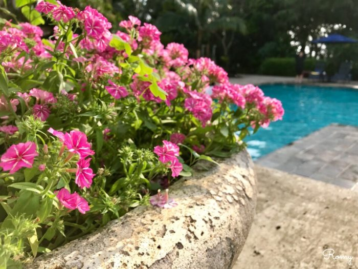 「ホテル ニラカナイ西表島」のプール