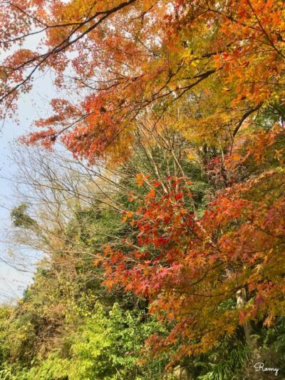 鎌倉「妙本寺」の紅葉