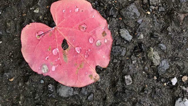 葉っぱと雫