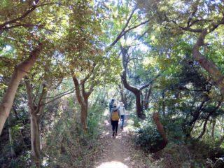 ゆるり北鎌☆野草ウォーキング!北鎌倉の里山をお散歩して古民家で野草料理を味わってきました