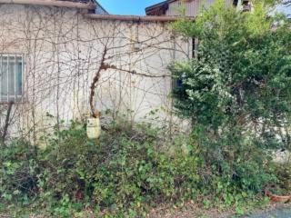 さまざまな植物が生い茂る壁